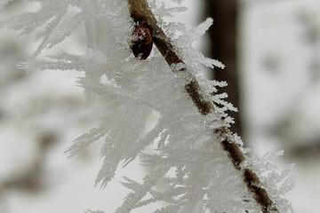 یخ زدن عجیب درختان در آمریکا به علت سرمای زیاد/ فیلم