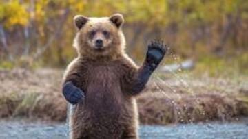 تلاش خرسها برای یافتن غذا در کوه های مازندران/ فیلم