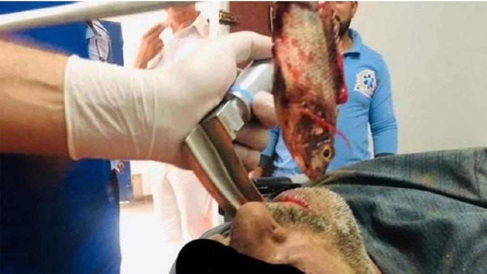 عکسی از بیرون آوردن یک ماهی زنده از دستگاه تنفسی یک ماهی گیر مصری