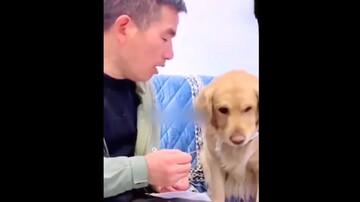 اصرار سگ به صاحبش برای استفاده از ماسک در دوران کرونا/ فیلم