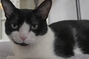 محافظت گربه از عروسک بچه گربه / فیلم