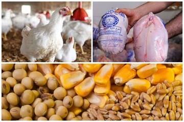 رئیس کانون مرغداران: مردم در خانه مرغ احتکار میکنند!
