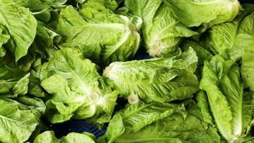 درمان یبوست به روش ساده خانگی و با مصرف چند گیاه دارویی