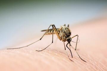 عجیب ترین روش از بین بردن پشهها در جهان / فیلم