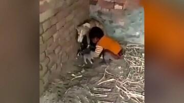 جدال سگ ماده با کودک بازیگوش / فیلم