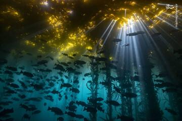 صحنه های شگفت انگیز از اعماق اقیانوس / فیلم
