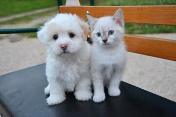 حمایت جالب یک سگ از بچه گربه / فیلم