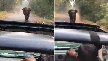 حمله فیل به خودروی گردشگران در هند / فیلم
