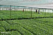 شرایط واردات محصولات کشاورزی و دامی مشخص شد