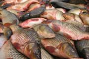 افزایش ۲ برابری قیمت انواع ماهی در آستانه شب عید/ هر کیلو قزل آلا ۶۰ هزار تومان