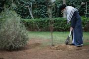 کاشتن درخت از حسنات است / فیلم