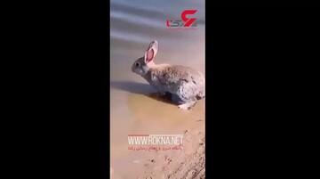 شنای دیدنی خرگوش در آب / فیلم