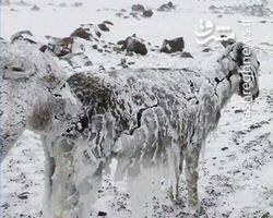 یخ زدن حیوانات زنده در دمای منفی ۵۱ درجه / فیلم