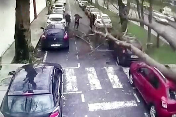 صحنه دلهره آور سقوط درخت بر روی سر عابرین و ماشینها / فیلم
