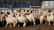 قیمت منطقی هر کیلو گوشت گوسفندی چقدر است؟
