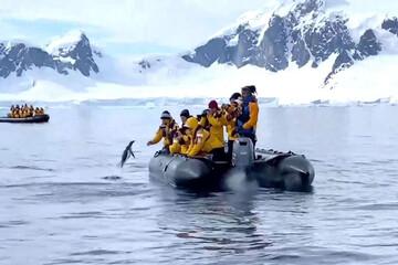 فرار پنگوئن از دست نهنگ قاتل به قایق انسانها / فیلم