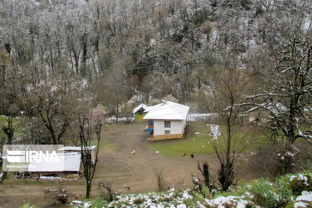 چهره زمستانی بهار در رضوانشهر