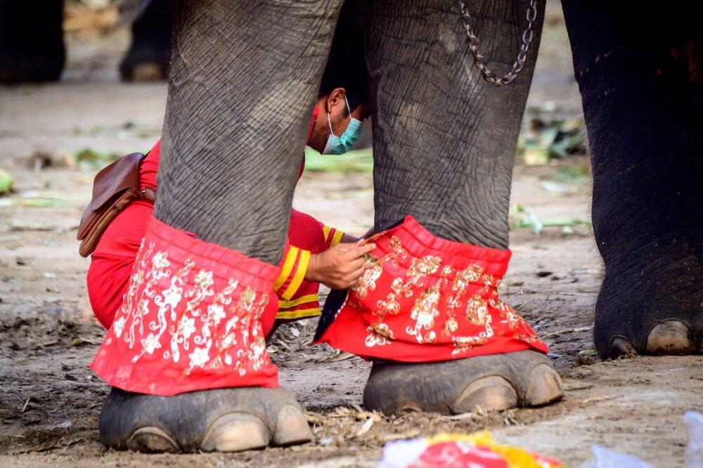 تصاویر دیدنی از روز ملی فیل در تایلند