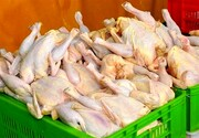 دلیل گرانی مرغ هیجان مردم برای خرید است!