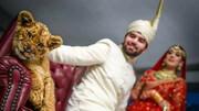 استفاده از توله شیر در فیلم و عکس عروسی / فیلم