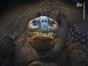 لحظه چُرت زدن لاکپشت در زیر آب / فیلم