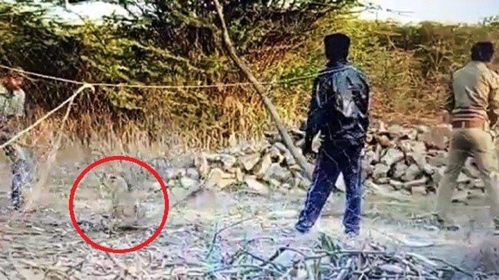 فداکاری ماموران جنگلبانی برای نجات توله شیر از تله!/ فیلم