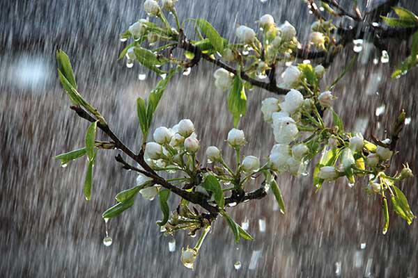 پیشبینی آب و هوا ۴ فرودین ۱۴۰۰/ کدام استانها به شدت بارانی میشوند؟