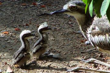 محافظت و دفاع جانانه پرنده از فرزندش / فیلم