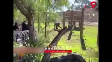 سلفی خطرناک گردشگر و دختر خردسالش با فیل در باغ وحش / فیلم