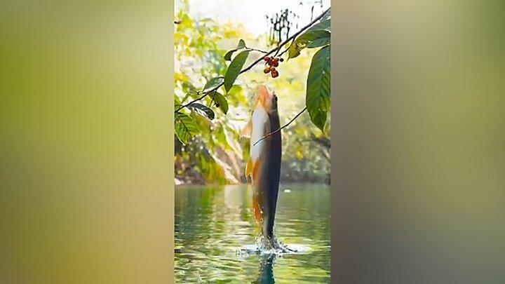میوه چیدن عجیب ماهی گرسنه از روی درخت / فیلم