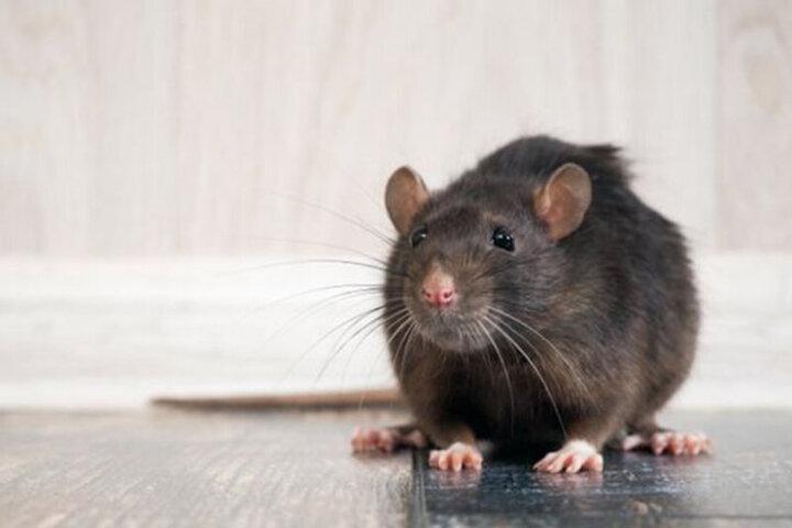 حمله موشها به انگلیس / فیلم
