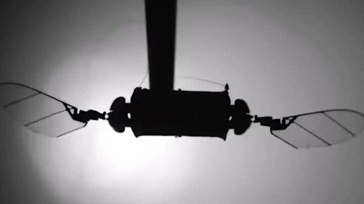 طراحی جالب پهپاد به شکل حشرات / فیلم