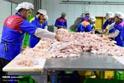 مرغ ۴۵۰۰ تومان گران شد/ قیمت هر کیلو ۲۴ هزار و ۹۰۰ تومان