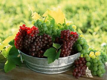 درمان شگفتانگیز کمردرد با مصرف این میوه