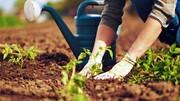 ترفندهای متفاوت و جذاب باغبانی / فیلم