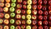 کاهش وزن و لاغری با مصرف این میوهها