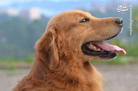 ویدئو دیدنی از سگ بازیگری که مردم را فریب داد