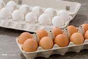 قیمت تخم مرغ به زیر نرخ مصوب رسید!