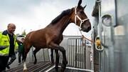 پرتاب جنازه از روی اسب، در مراسم تشییع جنازه / فیلم