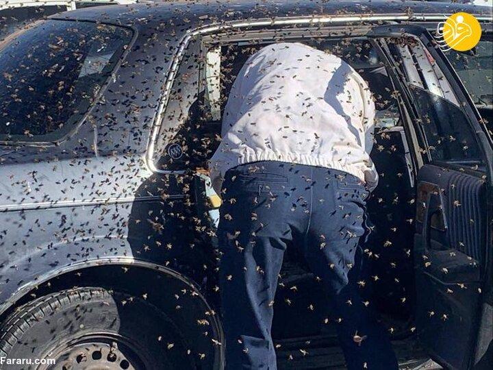 حمله ۱۵ هزار زنبور به راننده خودرو / فیلم