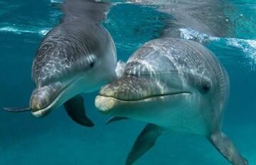 مرگ غمانگیز دهها دلفین در سواحل آکرا / فیلم