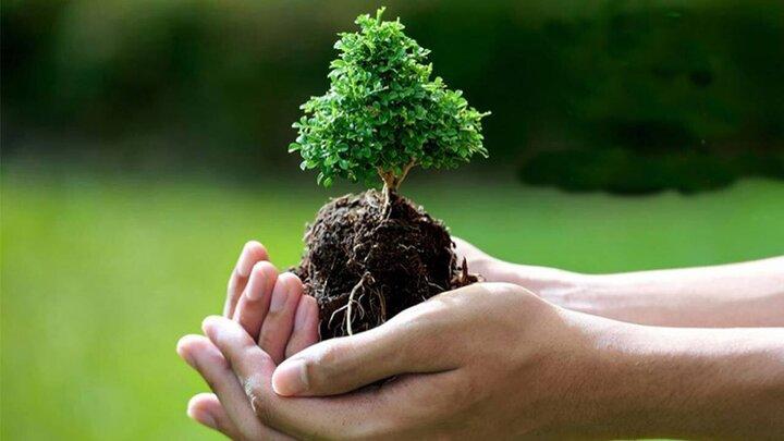 درختکاری عجیب و جالب دو جوان / فیلم