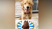 وقتی حیوانات از دیدن کیک شبیه به خودشان هیجانزده میشوند/ فیلم