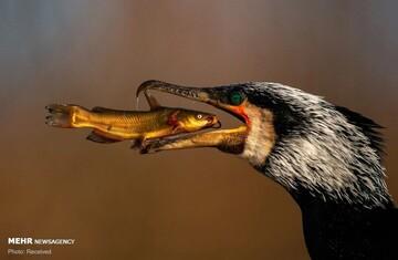 اعلام برندگان مسابقه عکاسی جهان طبیعی ۲۰۲۱ / عکسهای برگزیده