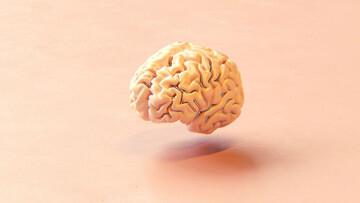 دانشمندان موفق به ساخت مغز با چاپگر ۳ بعدی شدند!