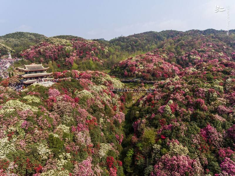 گزارش تصویری از دیدنیهای فصل بهار در سراسر جهان