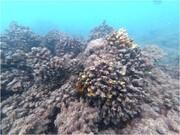 فاجعه محیط زیستی در جزیره خارک؛ تخلیه پساب نفتی به دریا