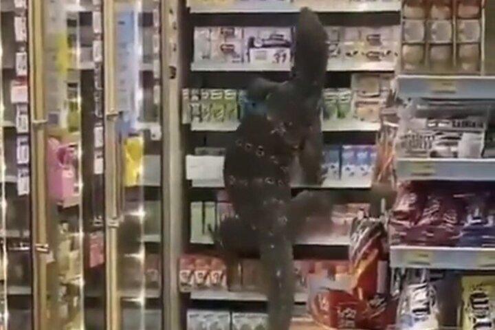 حمله مارمولک عظیم الجثه به فروشگاه / فیلم