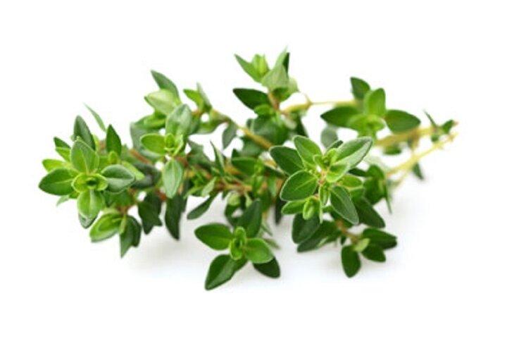 درمان بیماریهای تنفسی و بیخوابی با مصرف این  گیاه
