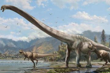 کشف فسیل حیوانی از دوران دایناسورها در شیلی / فیلم